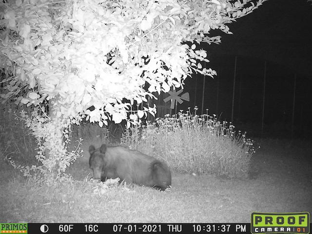Bear and Raccoon