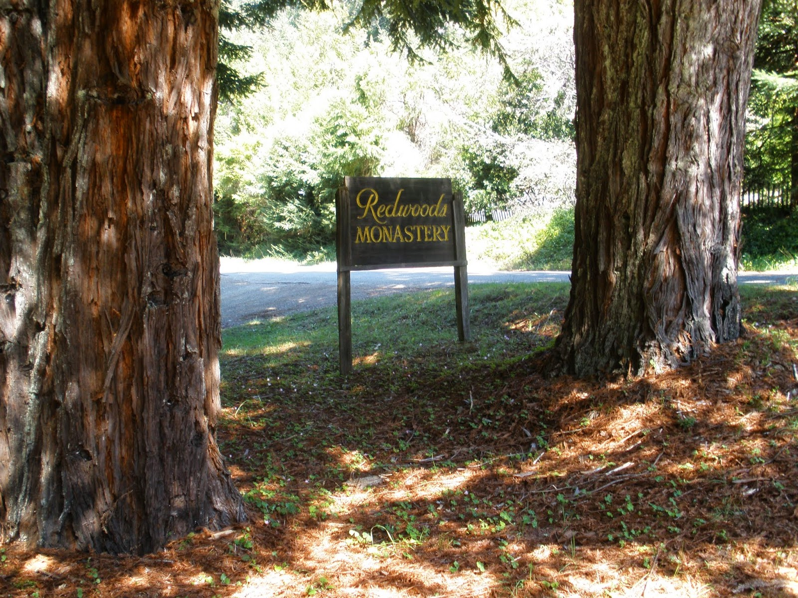 Following the Monastic Path at Redwoods Monastery